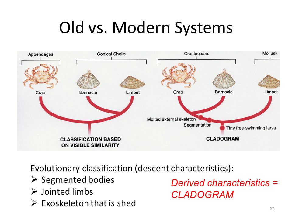Old vs. Modern Systems Derived characteristics rely on genetic/evolutionary information. Be able to construct a cladogram (see next slide)