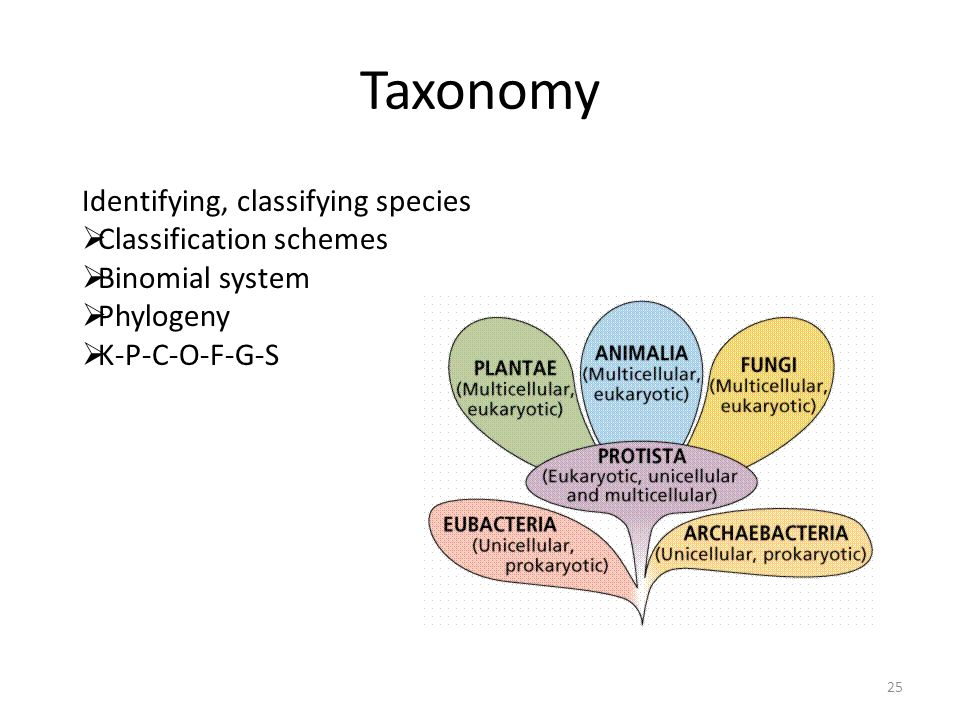 Taxonomy Identifying, classifying species Classification schemes