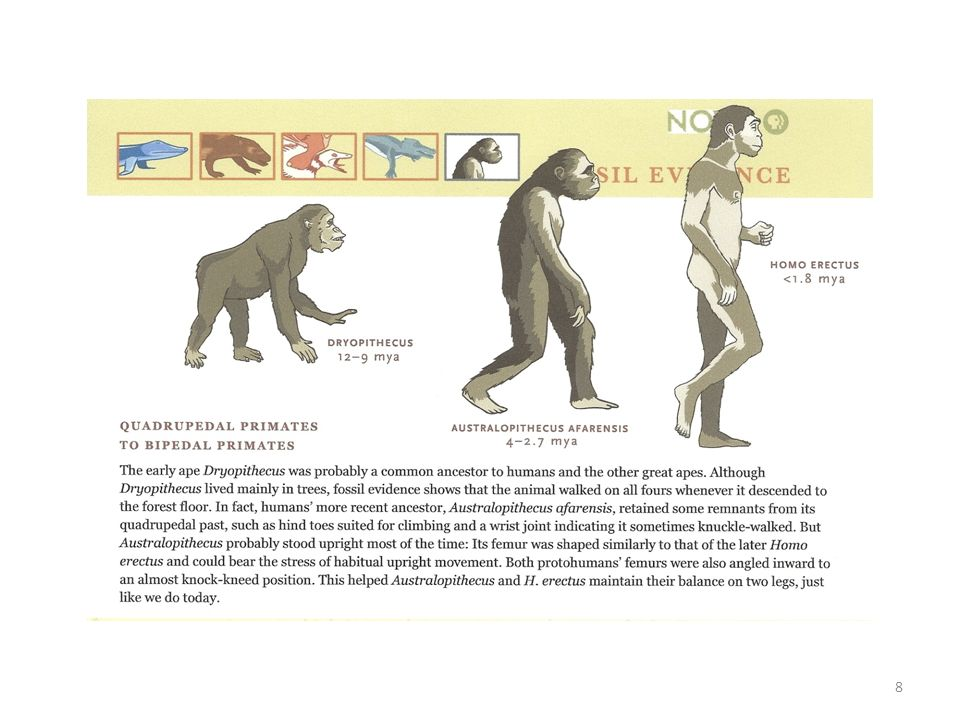 Just an example – no need to memorize, but interesting (SKIP for 2013 Evolution test)