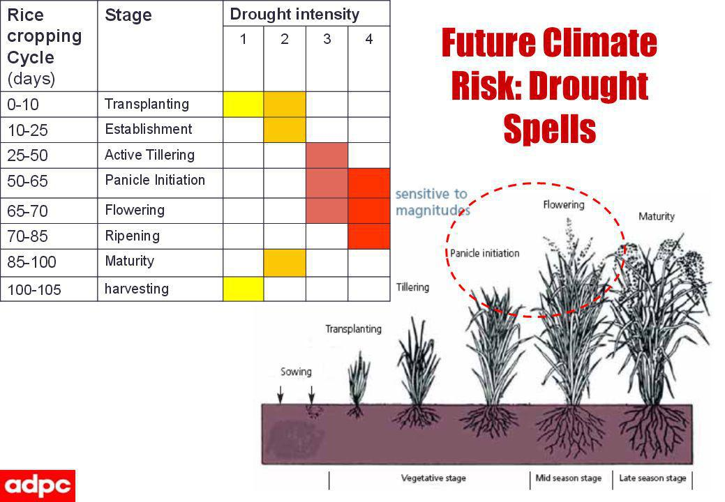 Future Climate Risk: Drought Spells