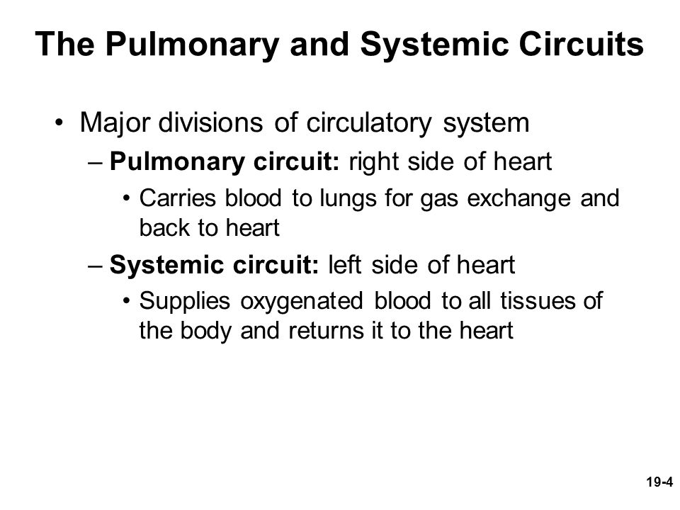 the pulmonary and systemic circuts Bony fishes to a complete division of the systemic and pulmonary circuits by  means of the four-chambered heart of mammals and birds (eg holmes, 1975.