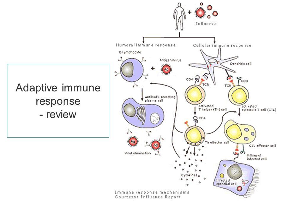 biol2300 adaptive immunity Innate vs adaptive immunity humoral adaptive immunity vs cell-mediated adaptive immunity created by sal khan watch the next lesson:.