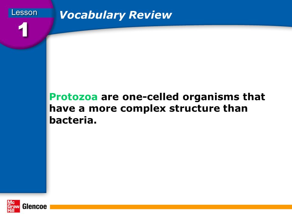 Vocabulary Review Protozoa are one-celled organisms that have a more complex structure than bacteria.