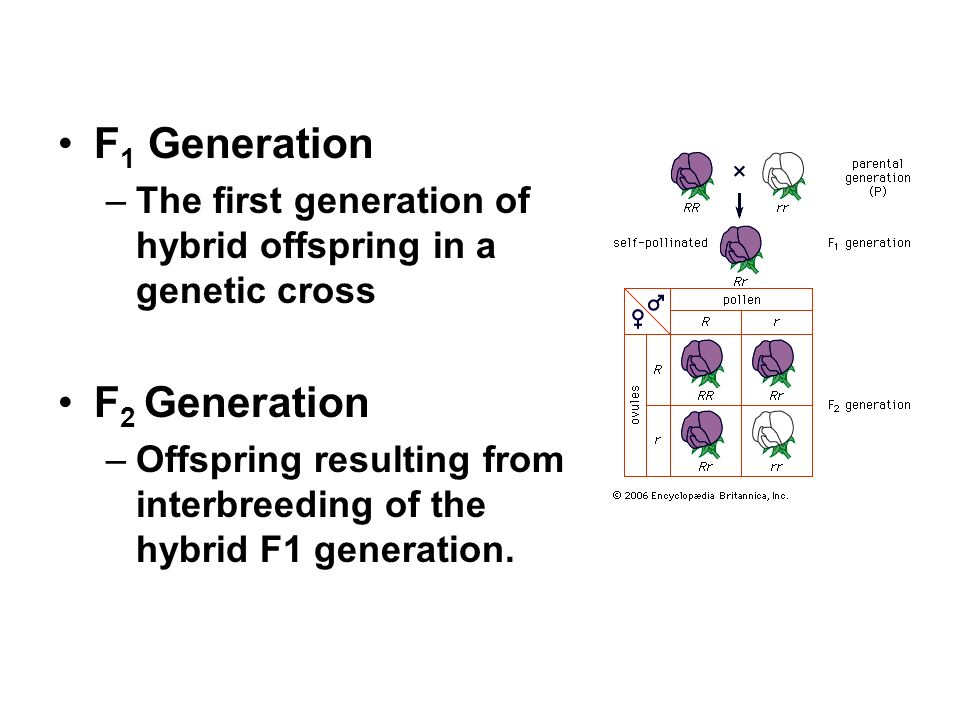 relationship between f1 and f2 generations in plants