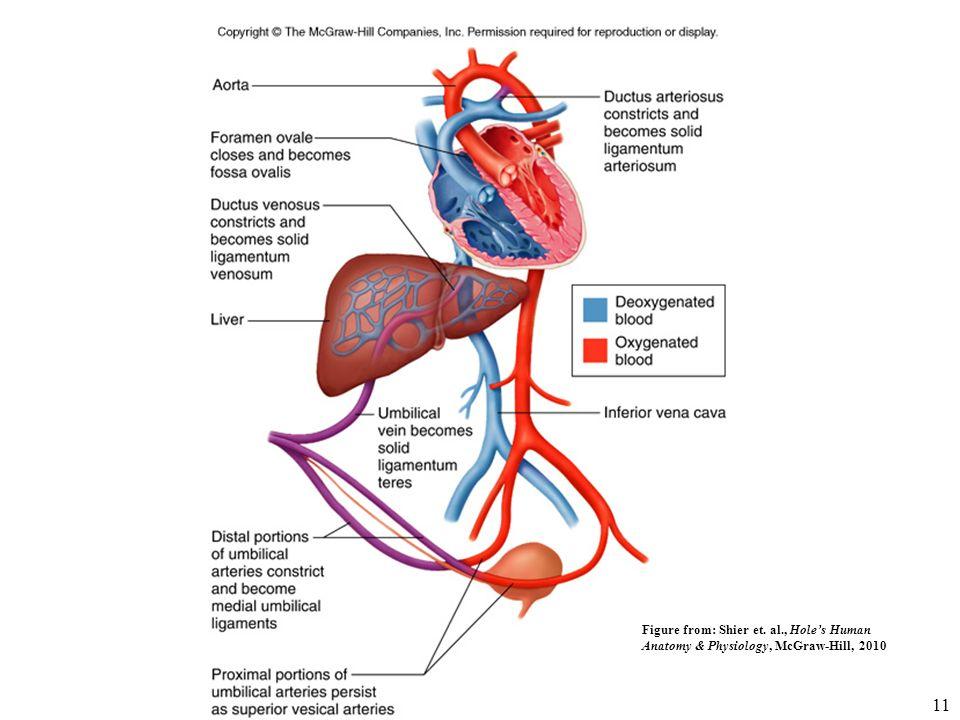 Berühmt Mcgraw Hill Verbinden Anatomie Und Physiologie Fotos ...