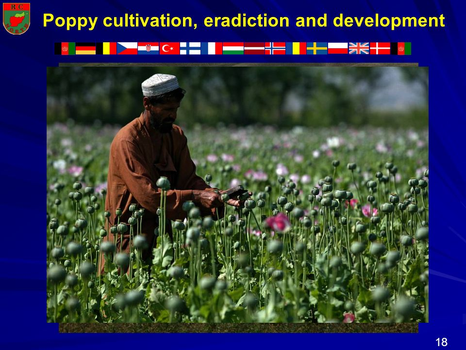 Poppy cultivation, eradiction and development