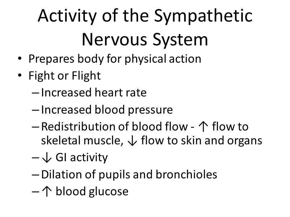 Sympathetic nervous system - Wikipedia