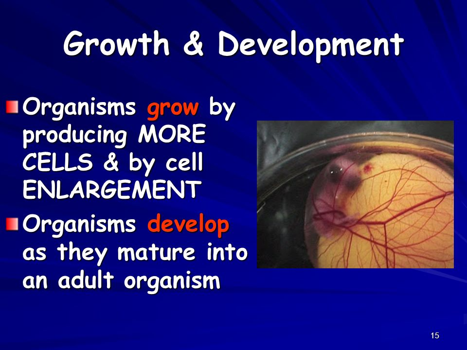 Growth & Development Organisms grow by producing MORE CELLS & by cell ENLARGEMENT.