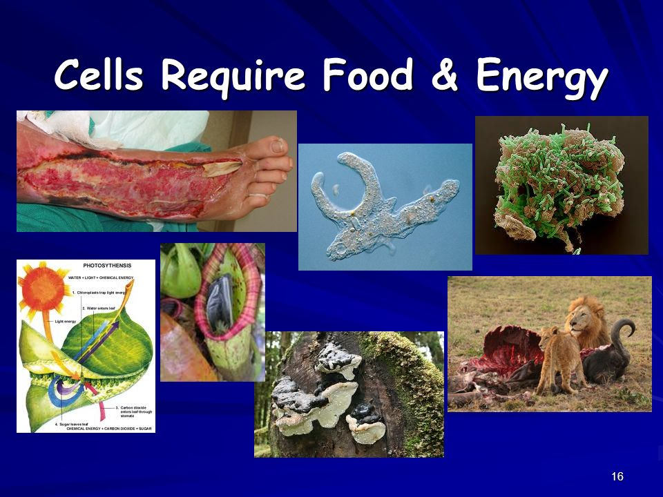 Cells Require Food & Energy