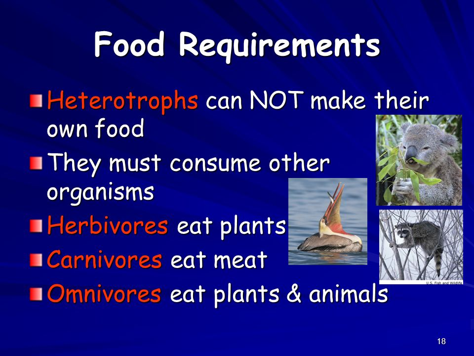 Food Requirements Heterotrophs can NOT make their own food