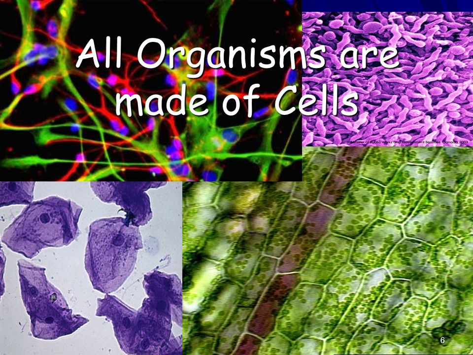 All Organisms are made of Cells