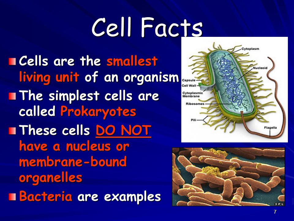 Cell Facts Cells are the smallest living unit of an organism