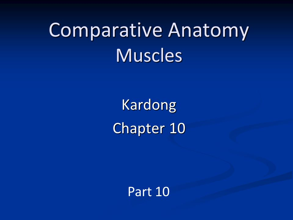 Comparative Anatomy Muscles Ppt Video Online Download