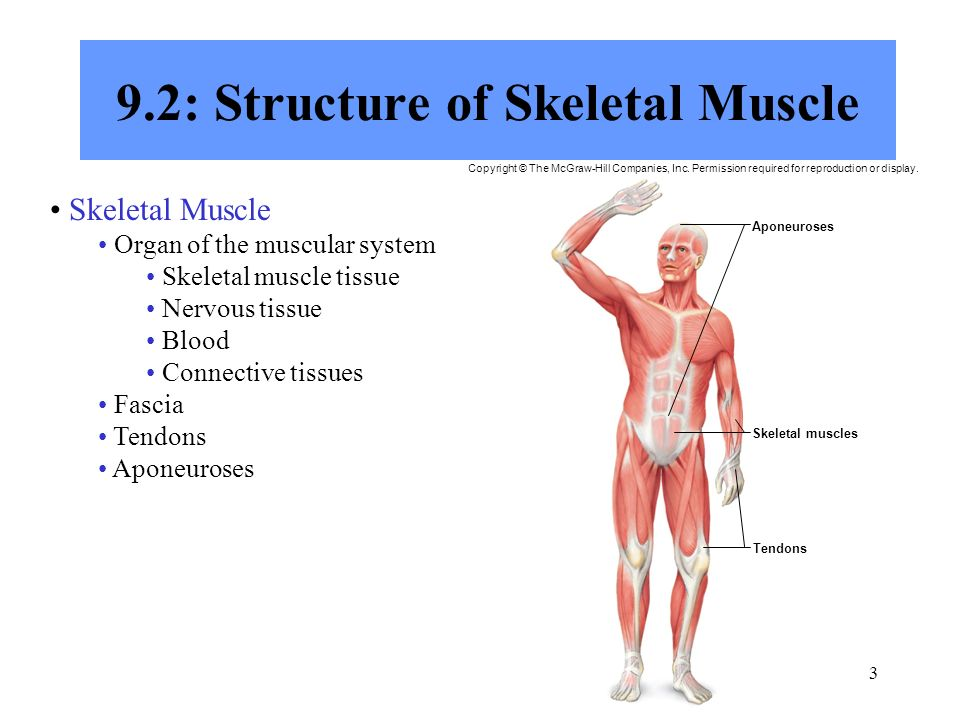 chapter 9 muscular system - ppt download,