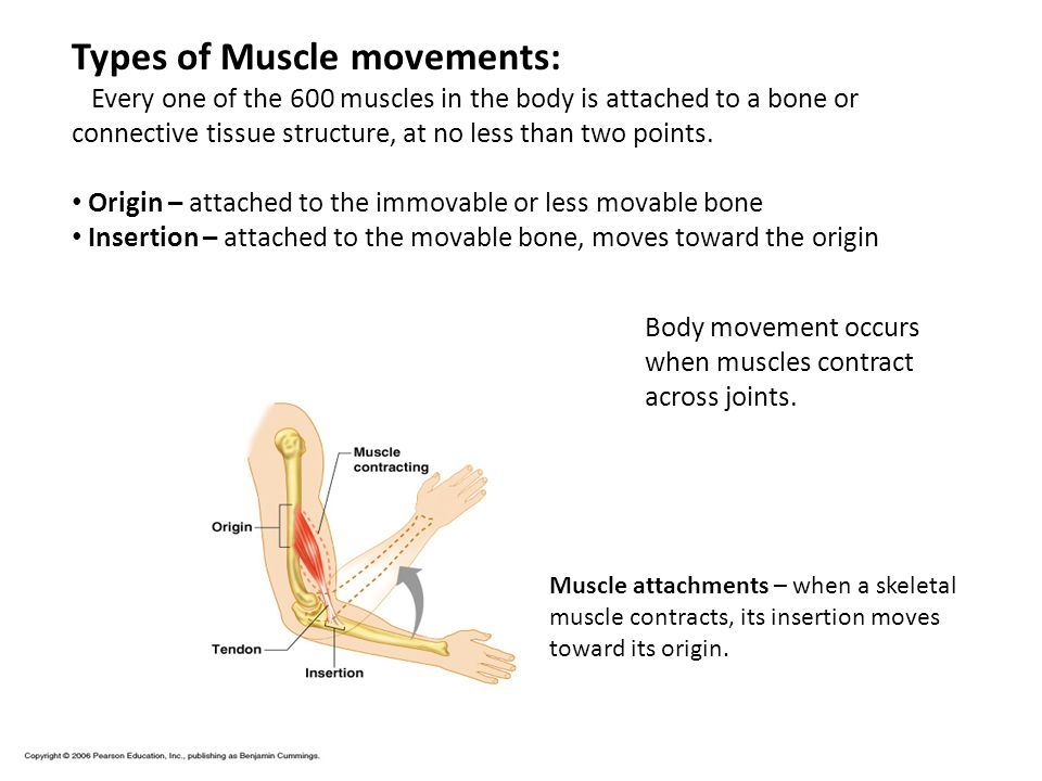 Types of Muscle movements: