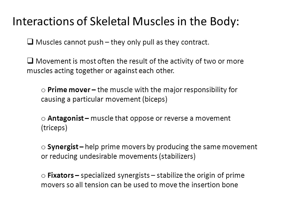 Interactions of Skeletal Muscles in the Body: