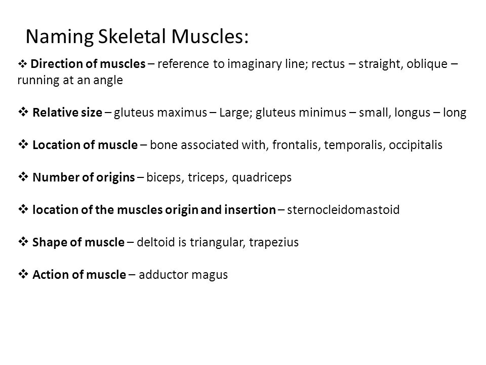 Naming Skeletal Muscles: