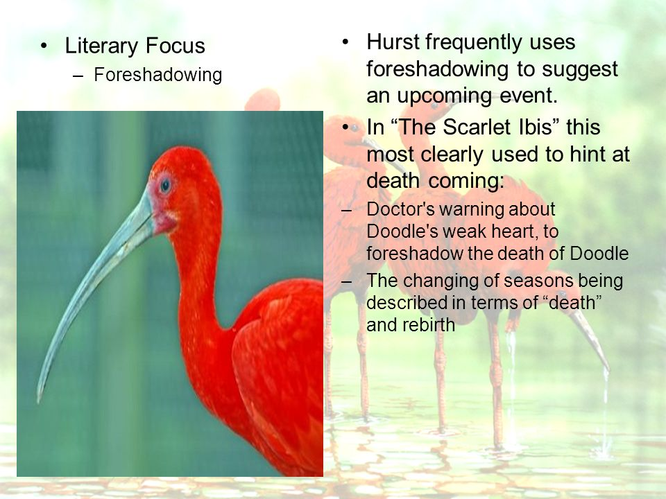 scarlet ibis foreshadowing essay Image contributes visual aids which, also, aid interpretation in this classic short  story, the scarlet ibis, by james hurst, foreshadowing,.