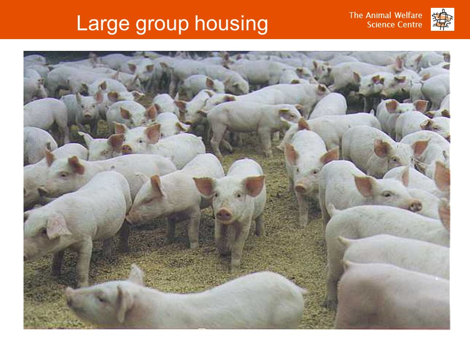 Large group housing
