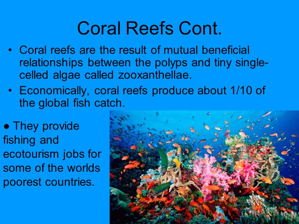 relationship between coral and algae