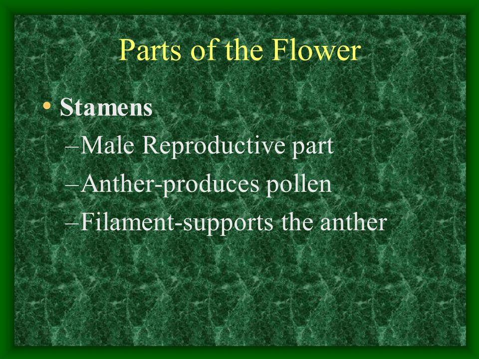 Parts of the Flower Stamens Male Reproductive part