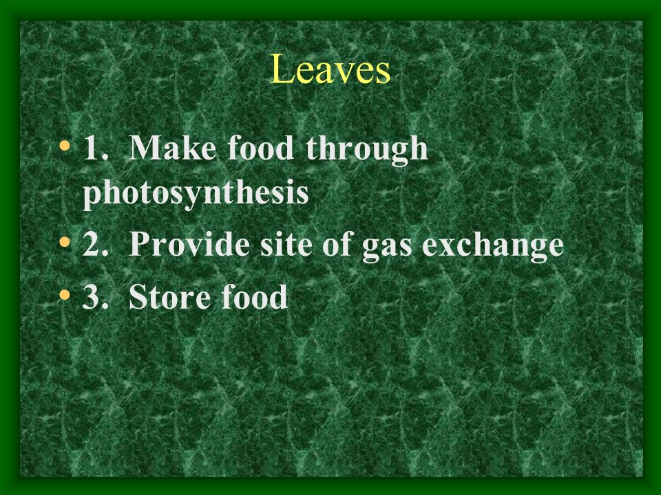 Leaves 1. Make food through photosynthesis