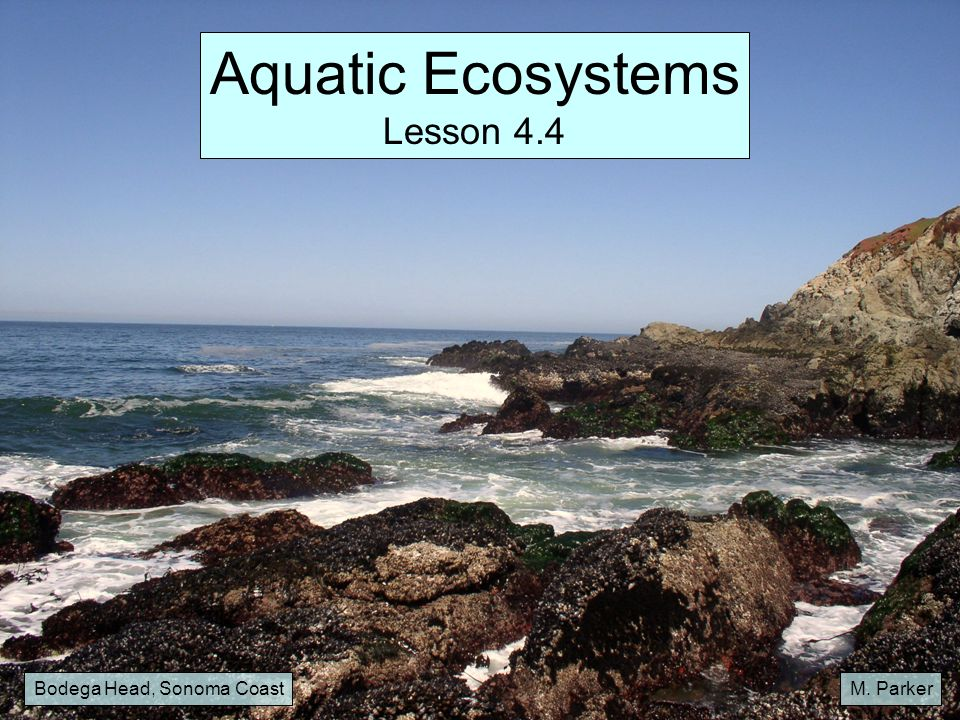 Aquatic Ecosystems Lesson 4.4 Bodega Head, Sonoma Coast M. Parker