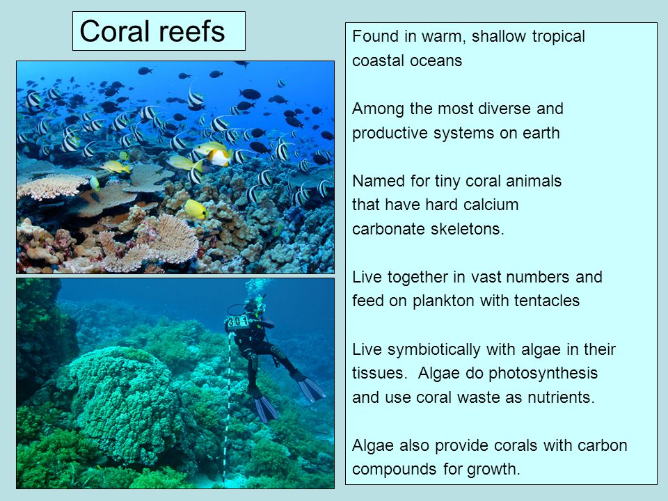 Coral reefs Found in warm, shallow tropical coastal oceans