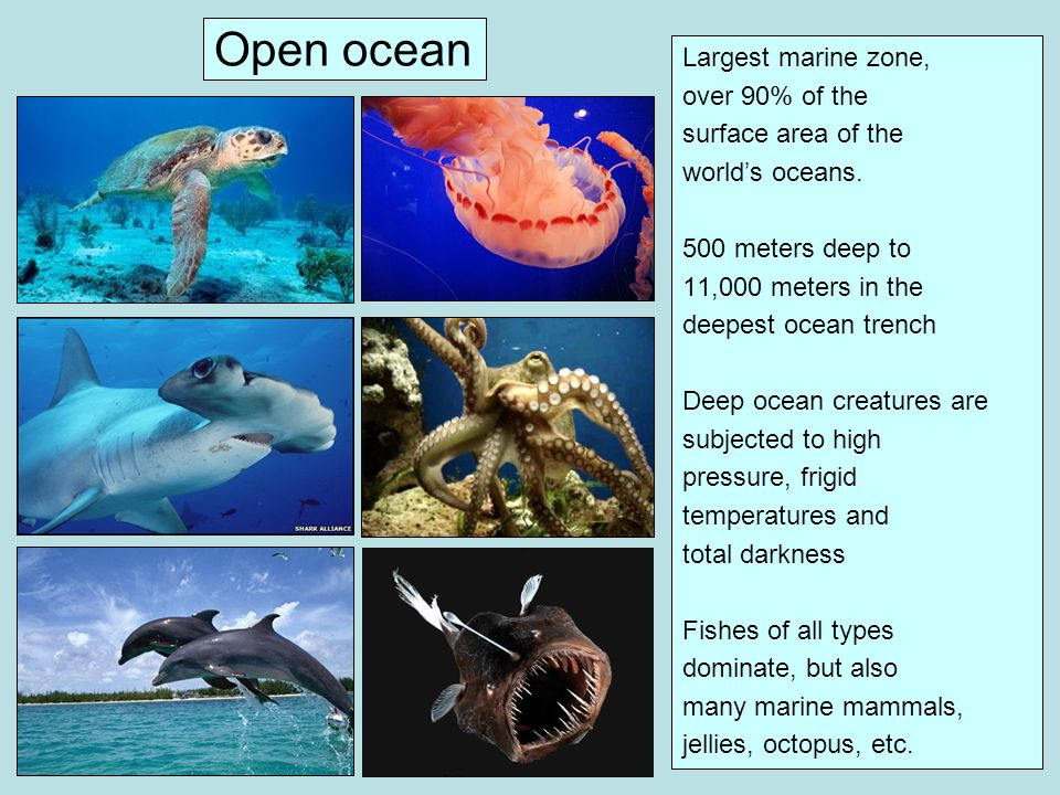 Open ocean Largest marine zone, over 90% of the surface area of the
