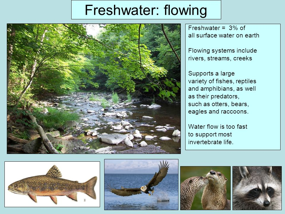 Freshwater: flowing Freshwater = 3% of all surface water on earth