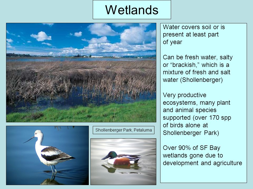 Wetlands Water covers soil or is present at least part of year