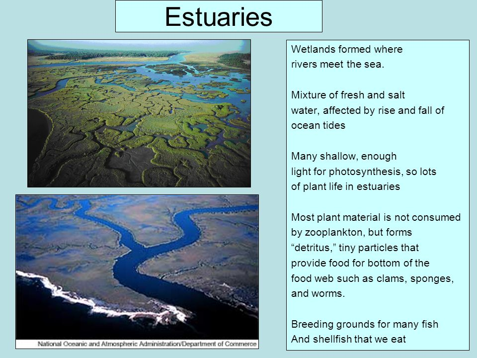 Estuaries Wetlands formed where rivers meet the sea.