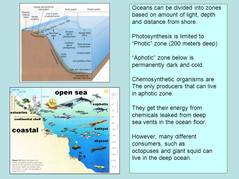 Oceans can be divided into zones