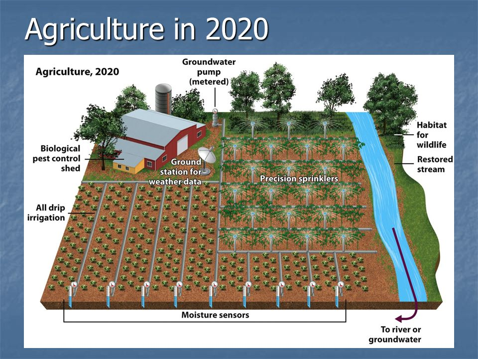 Agriculture in 2020