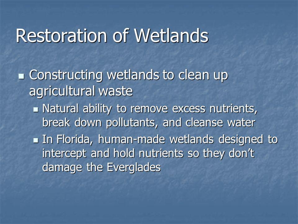 Restoration of Wetlands