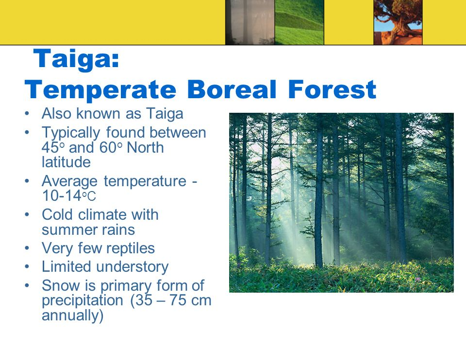 Taiga: Temperate Boreal Forest