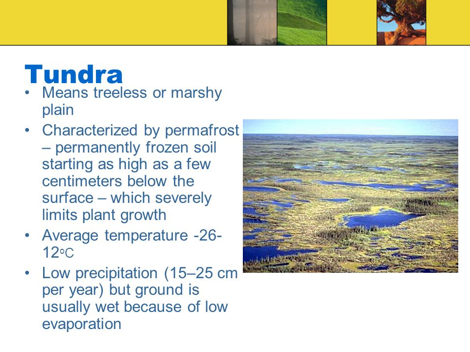Tundra Means treeless or marshy plain