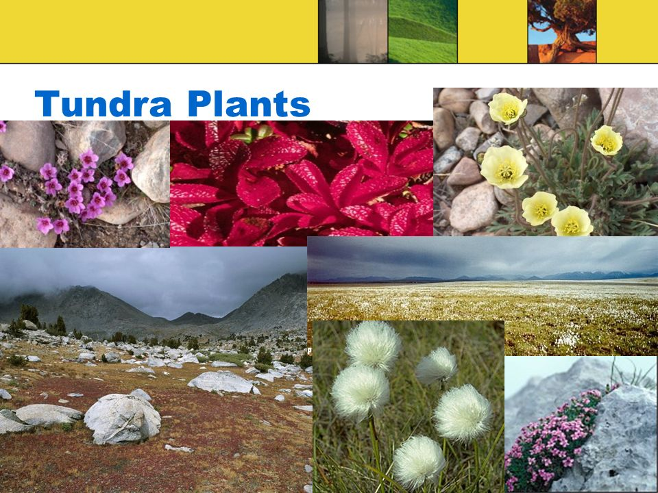 biomes of the world ppt video online download