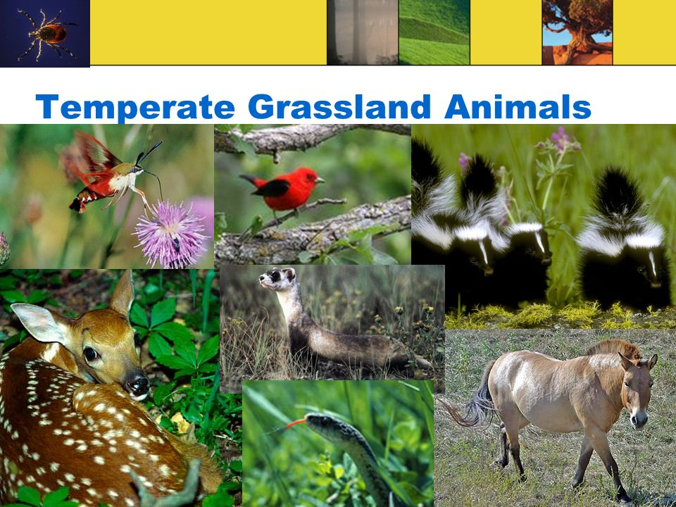 Temperate Grassland Animals