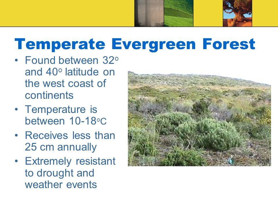 Temperate Evergreen Forest