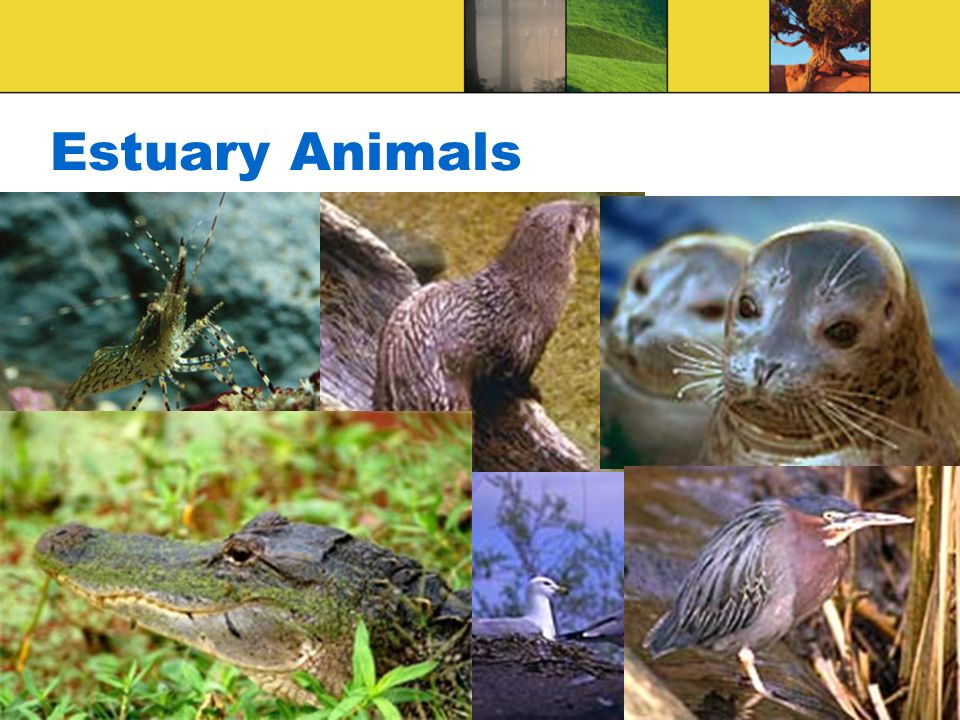 Estuary Animals