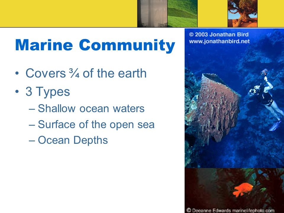Marine Community Covers ¾ of the earth 3 Types Shallow ocean waters