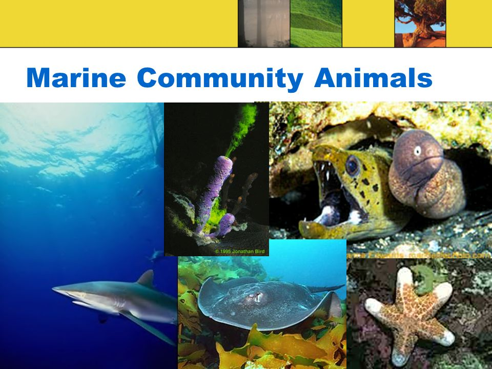 Marine Community Animals