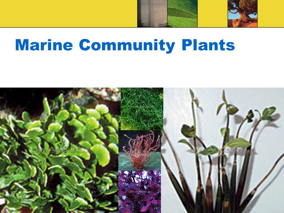 Marine Community Plants