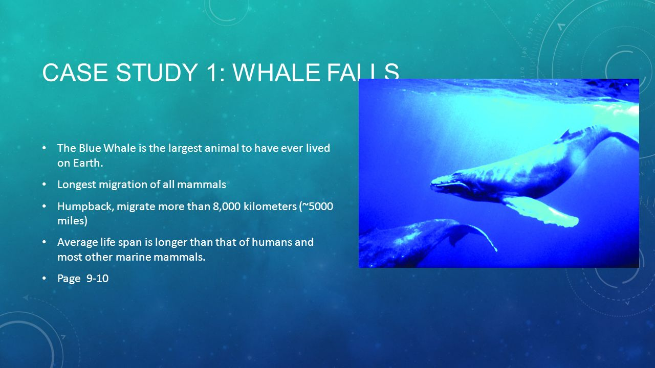 a case study on the whale Blockchain referral marketing program bluewhale foundation case study view reddit by invitereferralsweb – view source.