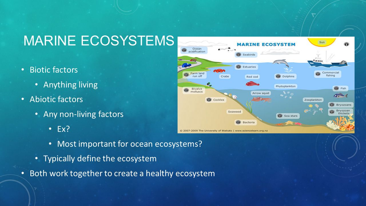 marine ecosystems Sdi marine ecosystems awareness diver divers have a vested interest in protecting the marine environment in many cases, divers do not have environmental information about local sites.