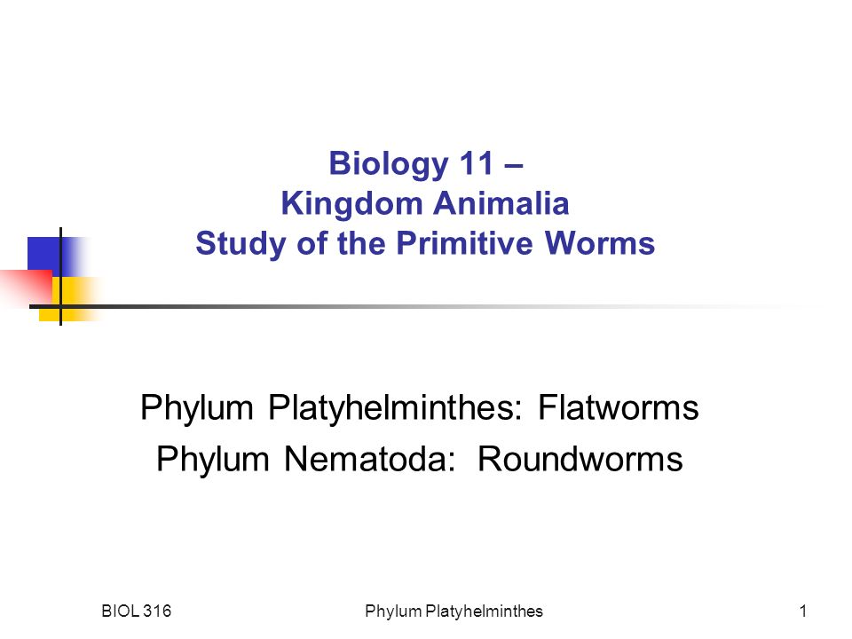 Image of: Characteristics Biology 11 Kingdom Animalia Study Of The Primitive Worms Slideplayer Biology 11 Kingdom Animalia Study Of The Primitive Worms Ppt