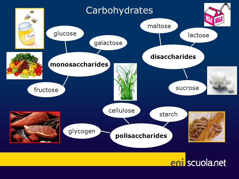 Carbohydrates maltose glucose lactose galactose disaccharides