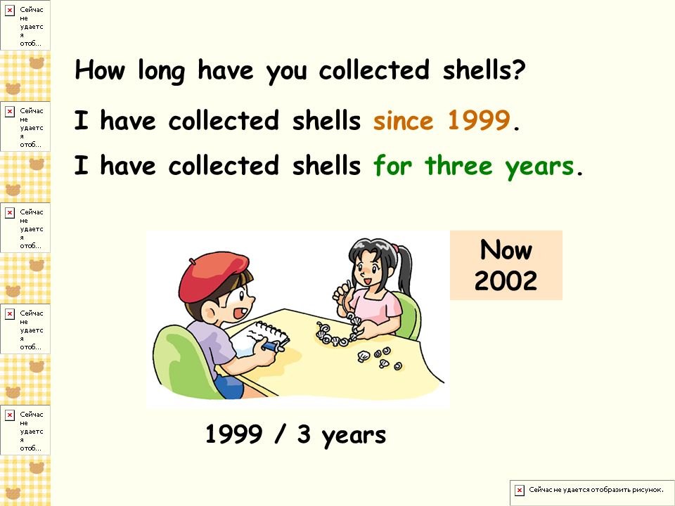How long have you collected shells