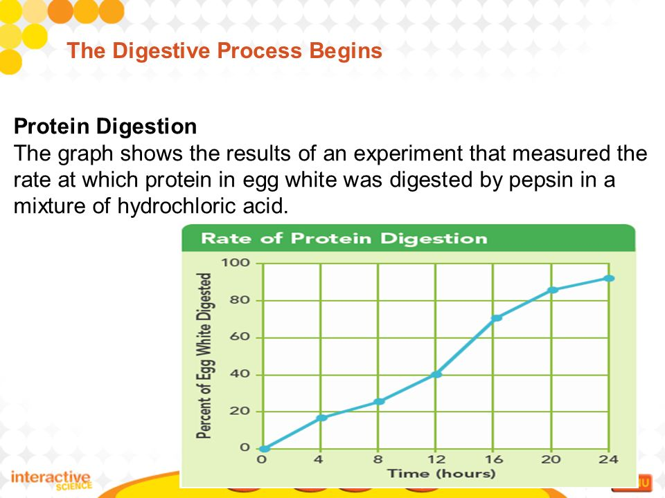 an experiment showing the process of digestion using protein and pepsin Catalase enzyme lab which is a harmful by-product of the process of cellular respiration if it builds you will perform reactions involved in digestion of.
